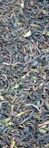 Darjeeling Tee Konsumtee