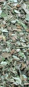 Melissenblätter geschnitten Bio
